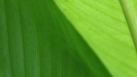 Leaves Closeup Background stock footage