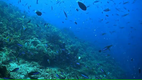 Coral Reef In Philippines stock footage