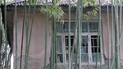 Abandoned Building In Bamboo stock footage