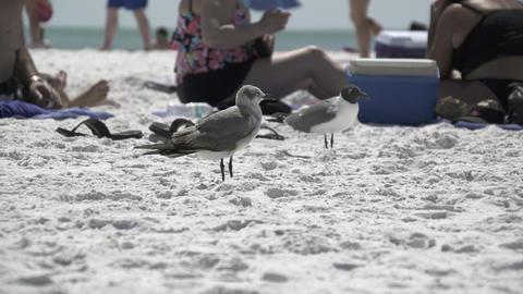 Birds on a Busy Beach (11 of 13) Footage