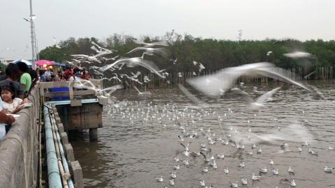 People Feeding Seagulls stock footage