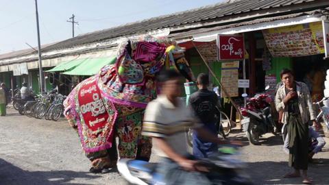 Elephant Costume Dance In Myanmar stock footage