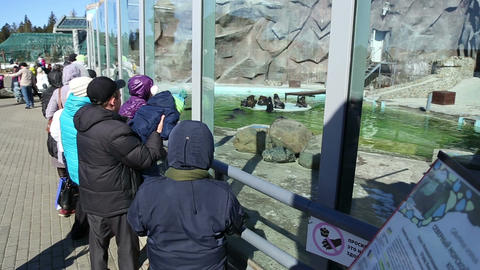 Visitors look at a zoo animals Live Action