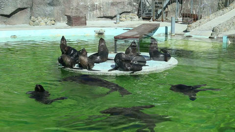 Enclosure with sea lions in the zoo Footage