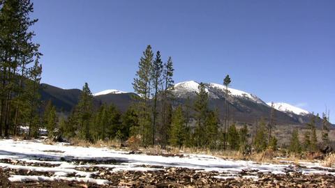 (Perfect Loop) Alpine Scene Windy Trees stock footage