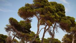 mallorca trees beach summer nature Footage