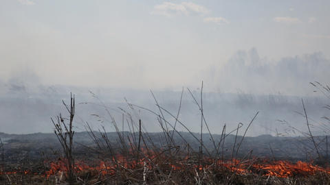 Burning dry grass on a strong wind near the wood Footage