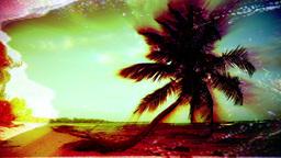 paradise palms nature sea tree Footage