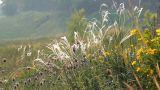 Wild Grass 1 Footage
