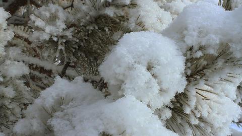 Winter scene 17 Stock Video Footage