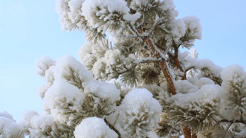 Winter scene 19 Stock Video Footage