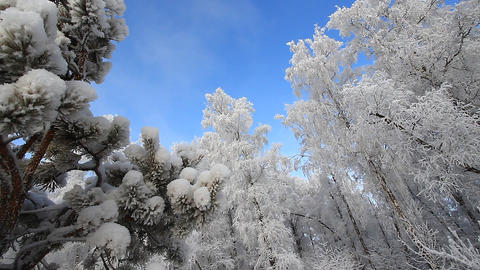 Winter scene 21 Stock Video Footage