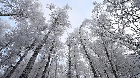 Winter scene 23 Stock Video Footage