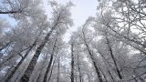 Winter scene 23 Footage