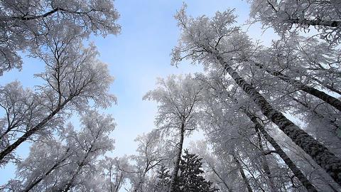Winter scene 25 Stock Video Footage