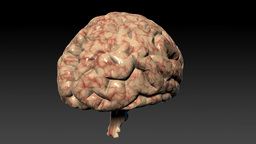 Human brain rotating,seamless loop,Alpha Channel Stock Video Footage