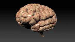 Human brain rotating,seamless loop,Alpha Channel Animation
