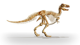 Dino T-Rex walking,loop Stock Video Footage