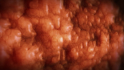 Inside human body,fat cells,highly detailed texture Stock Video Footage