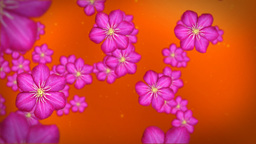 Flower against red Stock Video Footage
