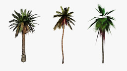 Palm trees flowing in the wind,Alpha included for easier... Stock Video Footage