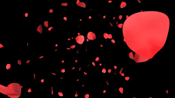 Rose petals with Alpha Stock Video Footage