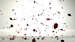 Rose petals in a white room falling on the floor,nice shadows on the ground Animation