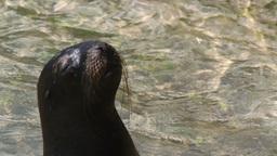sealion marine park Footage