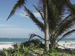 tulum paradise beach mexico caribbean palm tree Footage