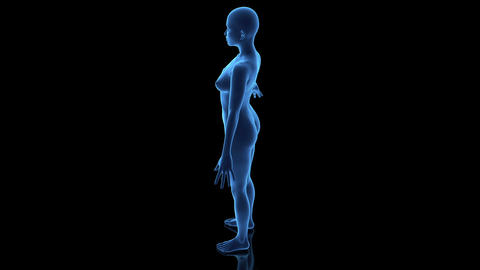 Female Body Loop Animation
