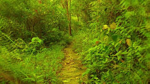 Fast biking along mountain path among tropical plantation Footage