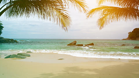 A sunny tropical beach with palm leaves on the sky background Footage
