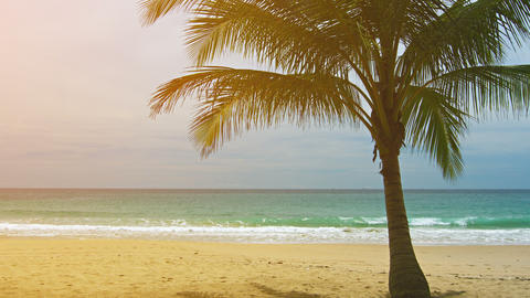 View of a deserted sandy beach with single palm tree Footage