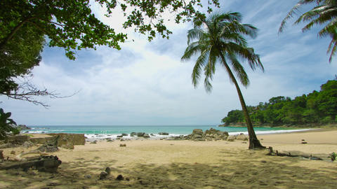 Palm tree on the shore of a deserted tropical sea. Beach in non-tourist season Footage