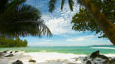 Shore of a tropical beach with palm trees. Vertical panorama Footage