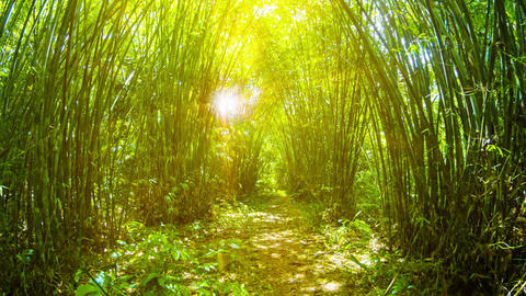 Golden Tunnel amongst Bamboo Stands in Thailand Footage