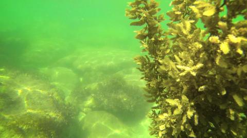 Underwater Scene with Rocks and Live Aquatic Plants Footage