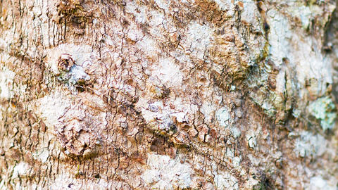 Very Slow. Closeup. Tracking Shot Of Tree Bark stock footage