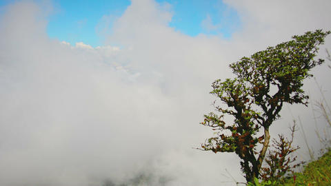 Gnarled Tree on a Mountainside above the Cloud Line Footage