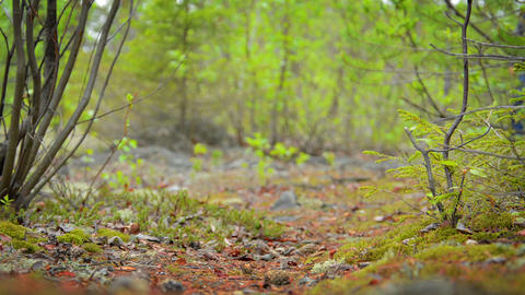 Low Angle of Hiker in Northern Forest in Russia Footage