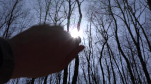 Hand to Sun. Silhouette, Sun Rays and Forest on Background. 4K UltraHD, UHD Live Action