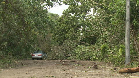 Trees Block Road After Hurricane Footage