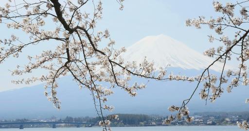 4 K 富士山 さくら Footage
