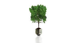 Tree growing in bulb wAlpha Stock Video Footage
