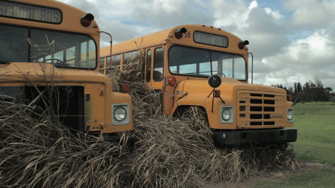 two retired school bus Footage