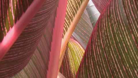tropical leaves closeup Footage
