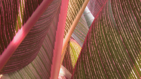 tropical leaves closeup Stock Video Footage