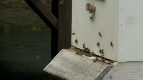 bee hive 4 Stock Video Footage