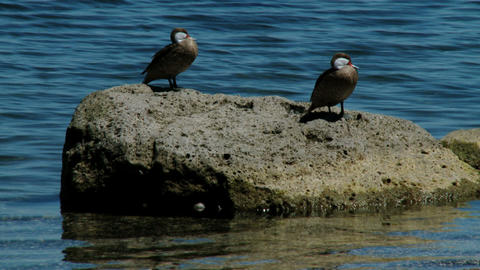 birds on the sea Stock Video Footage