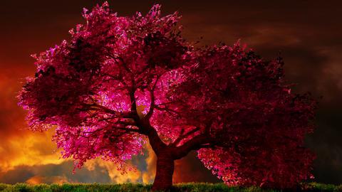 Cherry Blossoms Tree v1 02 Animation